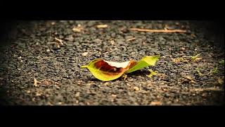 Dhonno - We Fall Down in Bangla