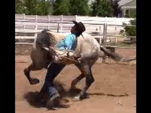 Defensive Aggression Behavior With Abused Horse   Mike Hughes