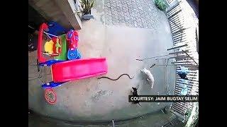 PANOORIN   Viral videos ng kabayanihan ng mga aso