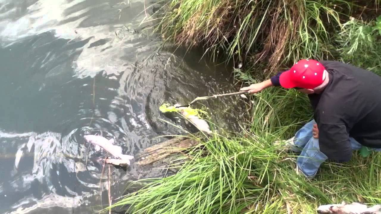 Mysterious fish kill at sacramento 39 s southside park youtube for Sacbee fishing report