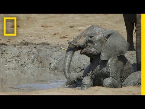 VIDEO: Bebes elefantes huérfanos. Quizá no pueda ayudarlos pero sí que puede amarlos