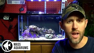How to care for nano reef tanks.  Taking care of small saltwater tanks