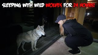 We Slept with WILD WOLVES for 24 HOURS | The Sargi Family