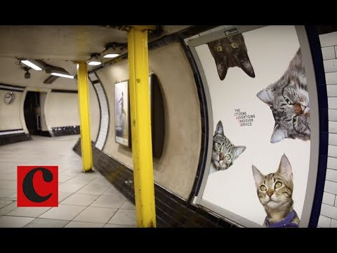 Cats Not Ads: Behind the takeover of Clapham Common tube station