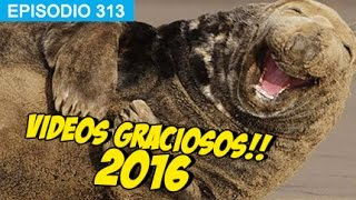 Videos Graciosos 2016 #whatdafaqshow
