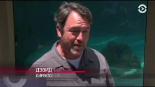 Нашествие акул