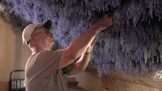 Lavender Farm's Sweet Smell of Success - Mike Nuestrom - Hatteberg's People TV