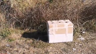 Rescue of nine puppies abandoned inside a carton box by the side of the road