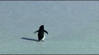 female penguin fight