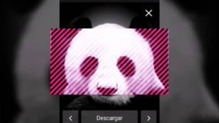 Panda S.F.M King místico