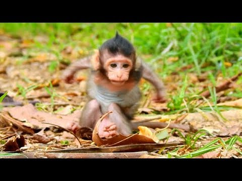 NEVER...NEVER WATCH BEFORE ! The Most Funny Baby Monkey Ever | Sweetest Baby Lizza Wanna Fly