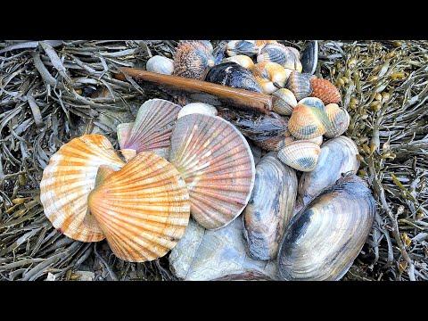 Coastal Foraging -