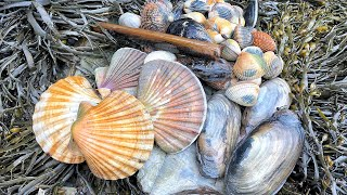 Coastal Foraging - Scallops, Cockles, Clams and Mussels Beach Cook Up
