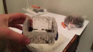 How to breed garden snails (Round Snails)