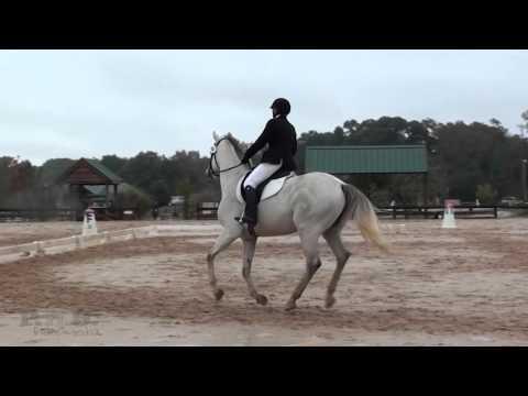 Kim Brunson & Tanerite    Texas Rose Horse Park Fall Horse Trials 2015