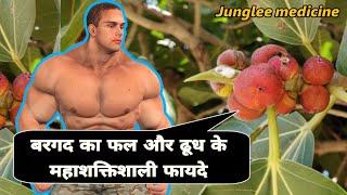 बरगद के फल और दूध के महाशक्तिशाली ओषधीय फायदे /Banyan tree