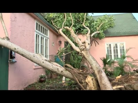 West Palm Beach neighborhood deals with three trees blocking streets.
