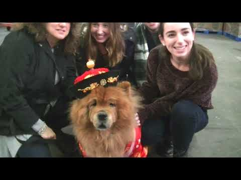 AKC Meet The Breeds in Westminster dog show 2018 b