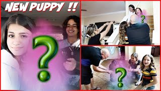 GETTING A NEW PUPPY !!!SURPRISE SISTER FOREVER !!!VLOG#344