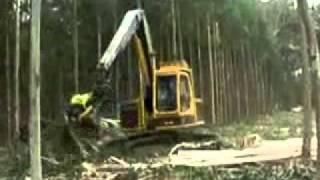 Destrucción de bosques automatizada