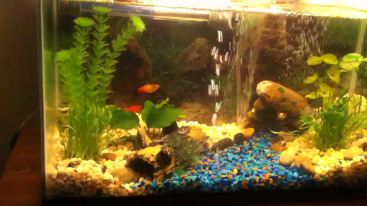 10 gallon tropical fish tank youtube for Fish for a 10 gallon tank