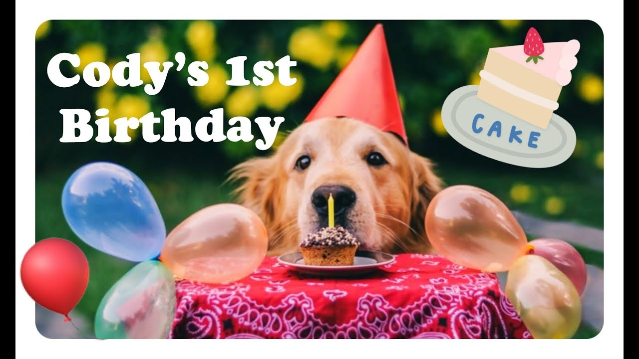 CELEBRATING OUR GOLDEN RETRIEVER PUPPYS FIRST BIRTHDAY FEAT DOG