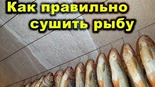 видео Сушка и вяление рыбы. Все о рыбной ловле