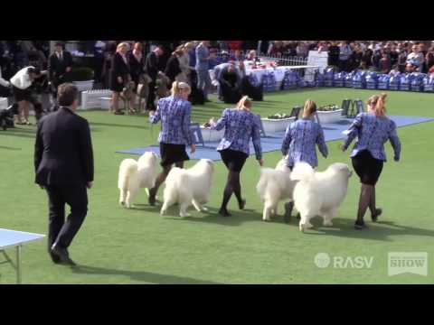 Best in Show - General Specials Day - Royal Melbourne Show All Breeds Championship Dog Show