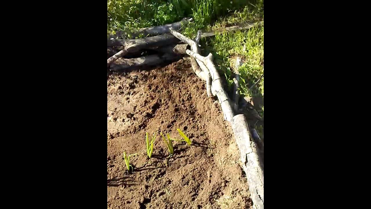 Update on my garden.https://plus.google.com/u/0/+endtimekimmie/posts.