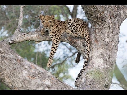 Kruger National Park March 2017