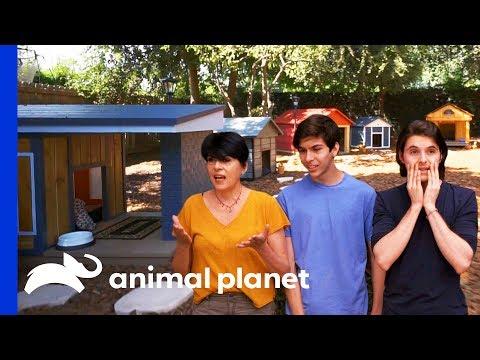 Dull Backyard Turned Into Incredible Dog Wonderland | Animal Cribs