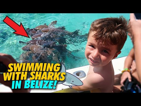 Snorkeling with Sharks in Belize | Cruise Vlog