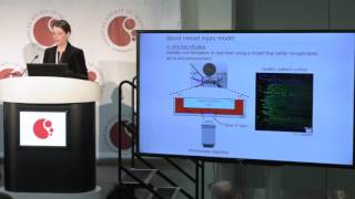 Targeted factor VIII delivery in hemophilia with inhibitors