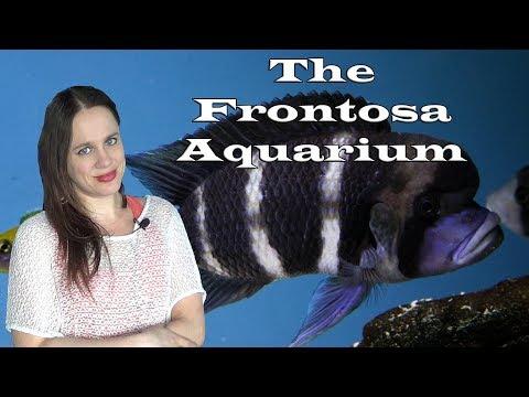 The Frontosa Aquarium