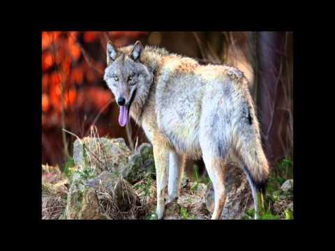Earthwatch Debate - Rewilding the UK