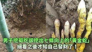 男子上山挖筍吃卻挖出七條向上的「黃金蛇」,細看之後才知自己發財了!