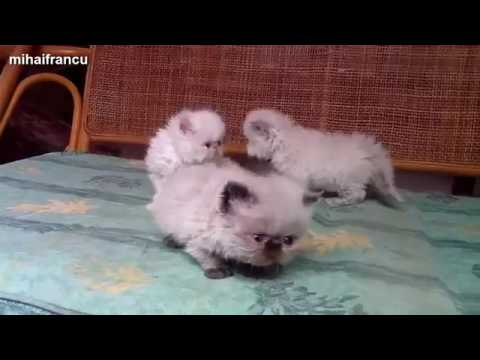 Funny Cats And Kittens Meowing Compilation 2017 NEW360p