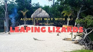 🌴 Florida Iguanas - Lizard - Leaping Lizards - Swimming Lizard