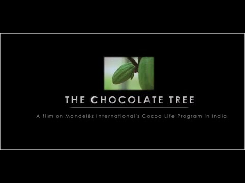The chocolate tree story. Cocoa Life India