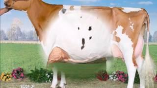 Riedill Holstein