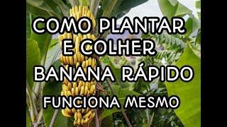 Como Plantar e Colher Banana Rápido – Técnica Incrível