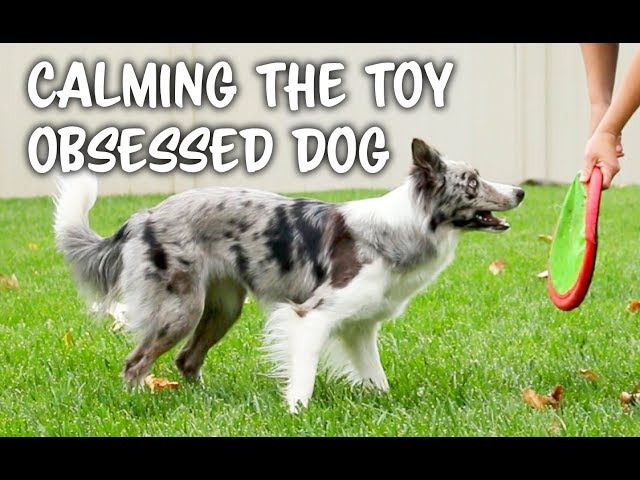 TOO excited? or OBSESSED with TOYS?   - Dog training by Kikopup