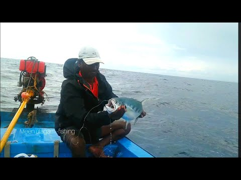 QUEENFISH CATCHING AT DEEP SEA//AMAZING FISHING SKILL