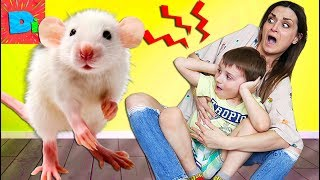 У Нас В Доме Завелась Мышь! Что Же Нам Делать? Дима И Мама Ищут Способы Истребить Грызуна!