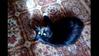Моя кошка хочет кота