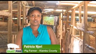 Pig farming the way to go - Kiambu part 2