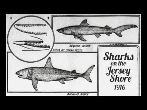 The  1916 Jersey Shore Shark Attacks