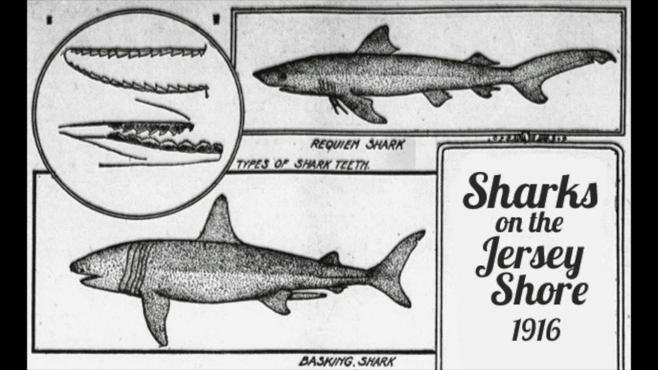 The 1916 Jersey Shore Shark Attacks - YouTube