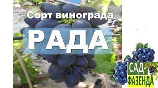Сорт винограда - Рада!