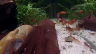 Aquarium austauschen & neu einrichten